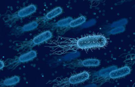 Pożyteczne mikroorganizmy- zdrowie człowieka